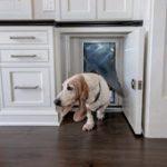 Pet Friendly Kitchen Design - Cabinet Doggy Door